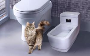 Фото кошачий биотуалет